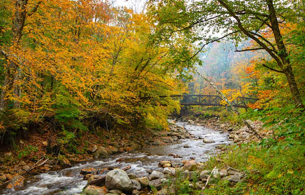 Fall foliage on the Appalachian Trail in Woodford, VT