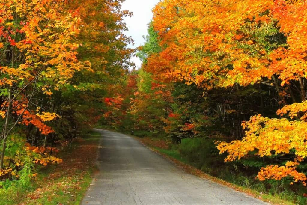 A back road in Woodford, Vermont in the fall.