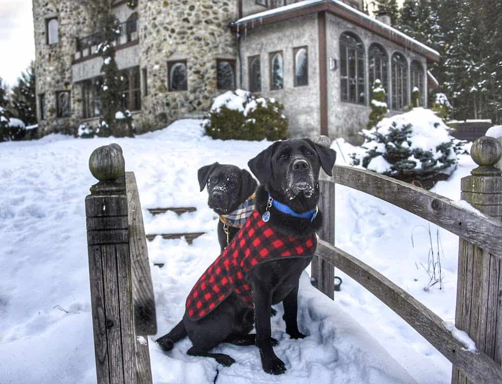 two black labradors wearing coats and sitting on a small footbridge covered with snow.