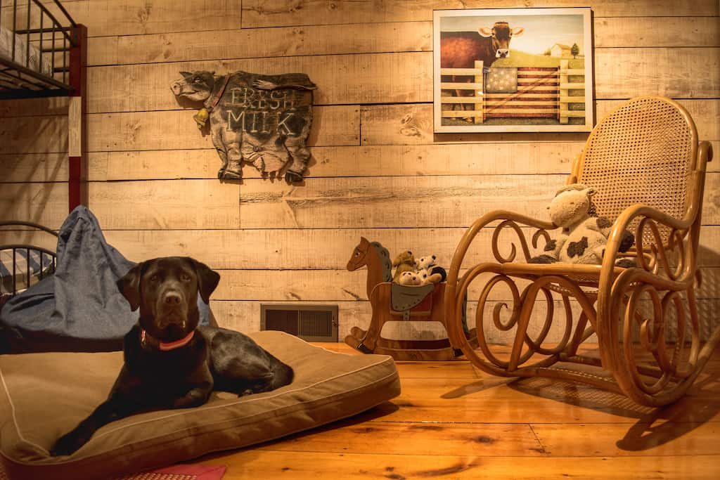 Flynn the dog lies on a dog bed in a vacation rental in Pownal VT