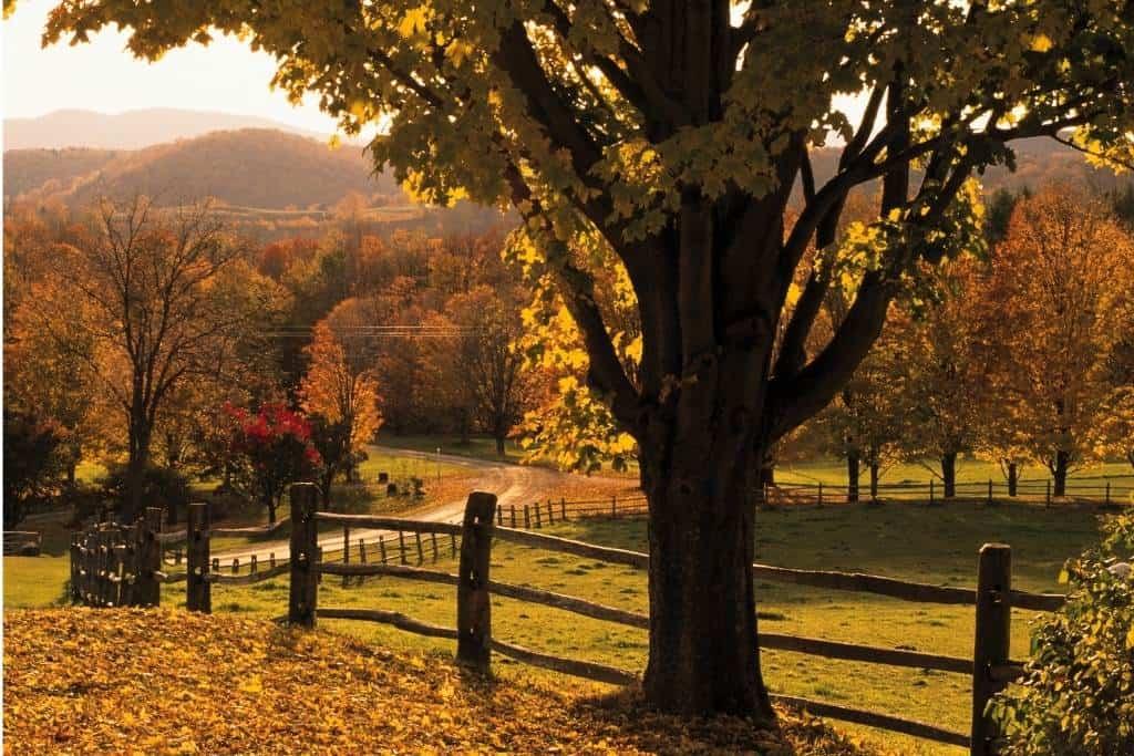 A split-rail fence along a farm field in Woodstock VT in the fall.