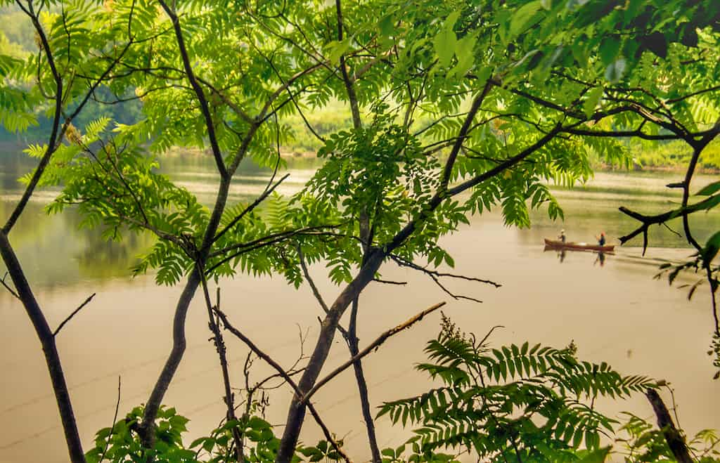 A canoe on the Connecticut River visible only through the trees from Wilgus State Park in VT.