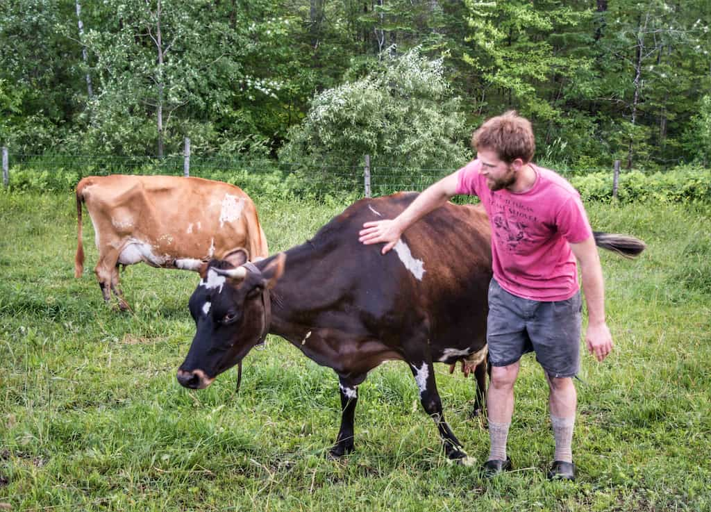 Evan, the host at Mountain Home Tent Sites, pets one of his dairy cows.