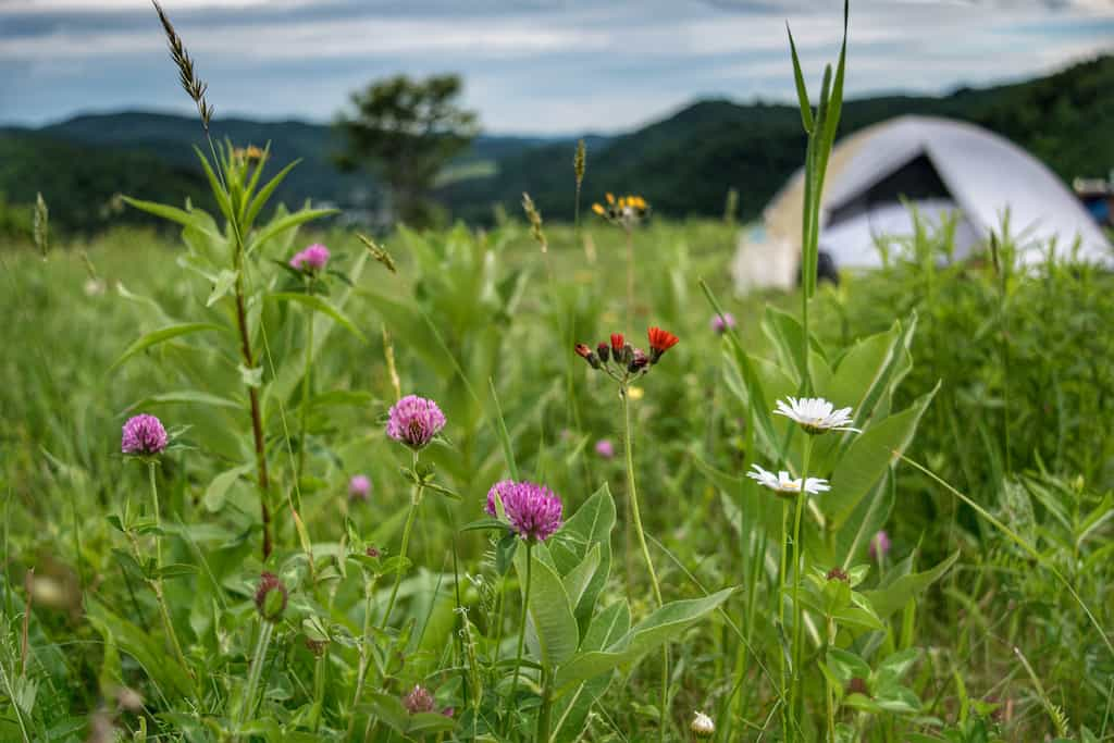A small tent in a field of wildflowers at Free Verse Farm in Vermont.