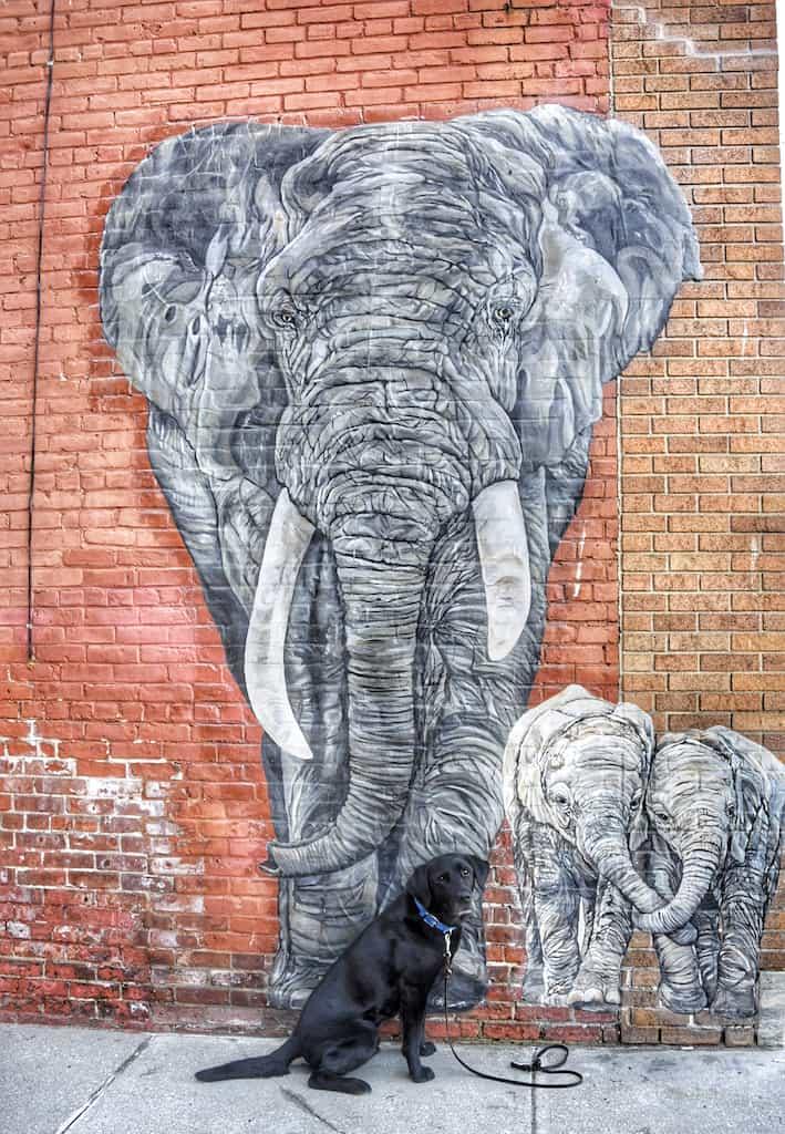 The Elephants mural in Rutland, Vermont.