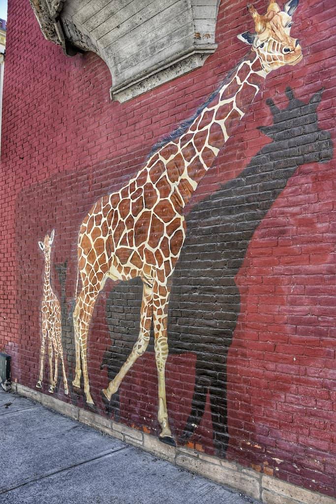 Giraffes mural in Rutland, Vermont.