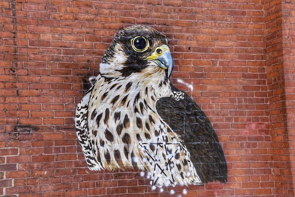 Peregrine falcon mural in Rutland, Vermont.
