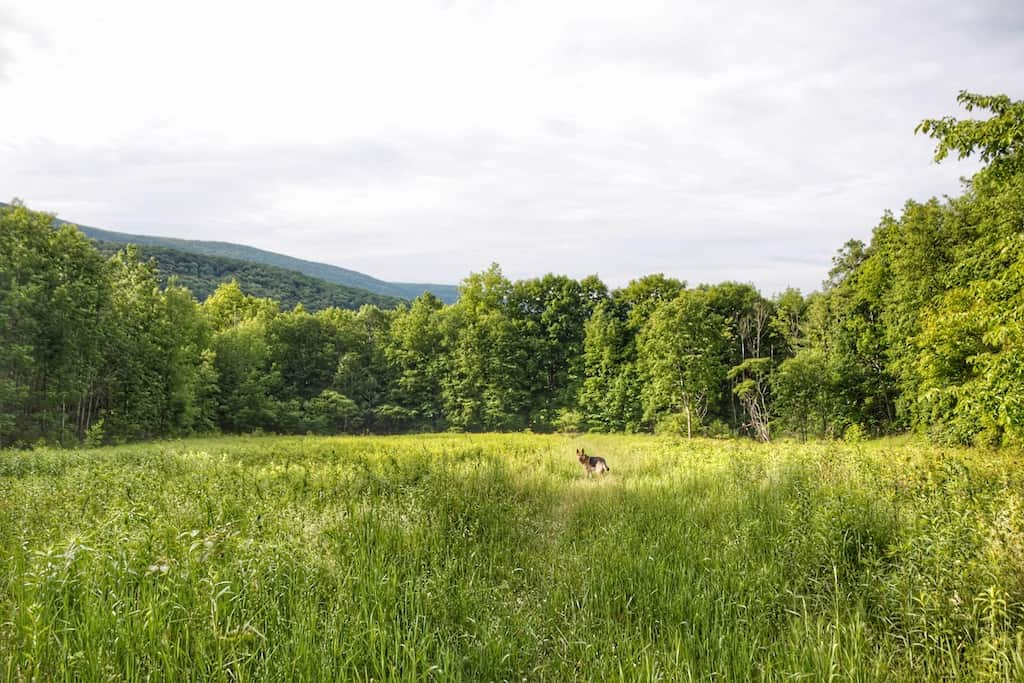 A German Shepherd dog on the hiking trail in Emerald Lake State Park in Vermont.
