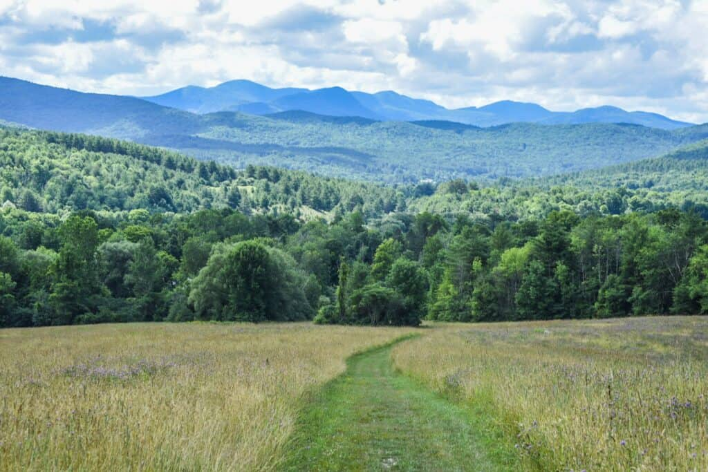 A mowed path through the meadow at Taconic Ramble State Park in Vermont.