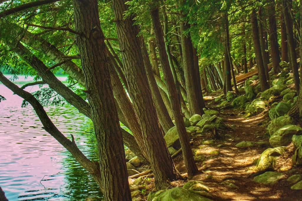 A hiking trail along Emerald Lake in Vermont.