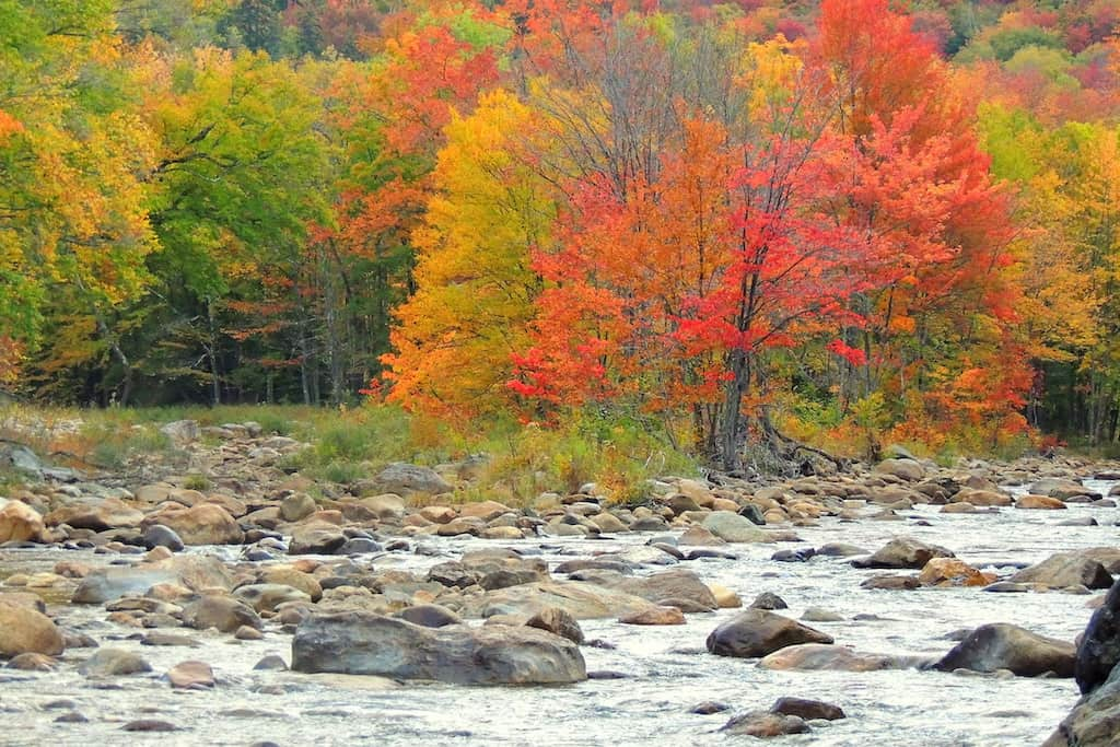 A tree covered with bright red leaves during fall in Wilmington, Vermont.