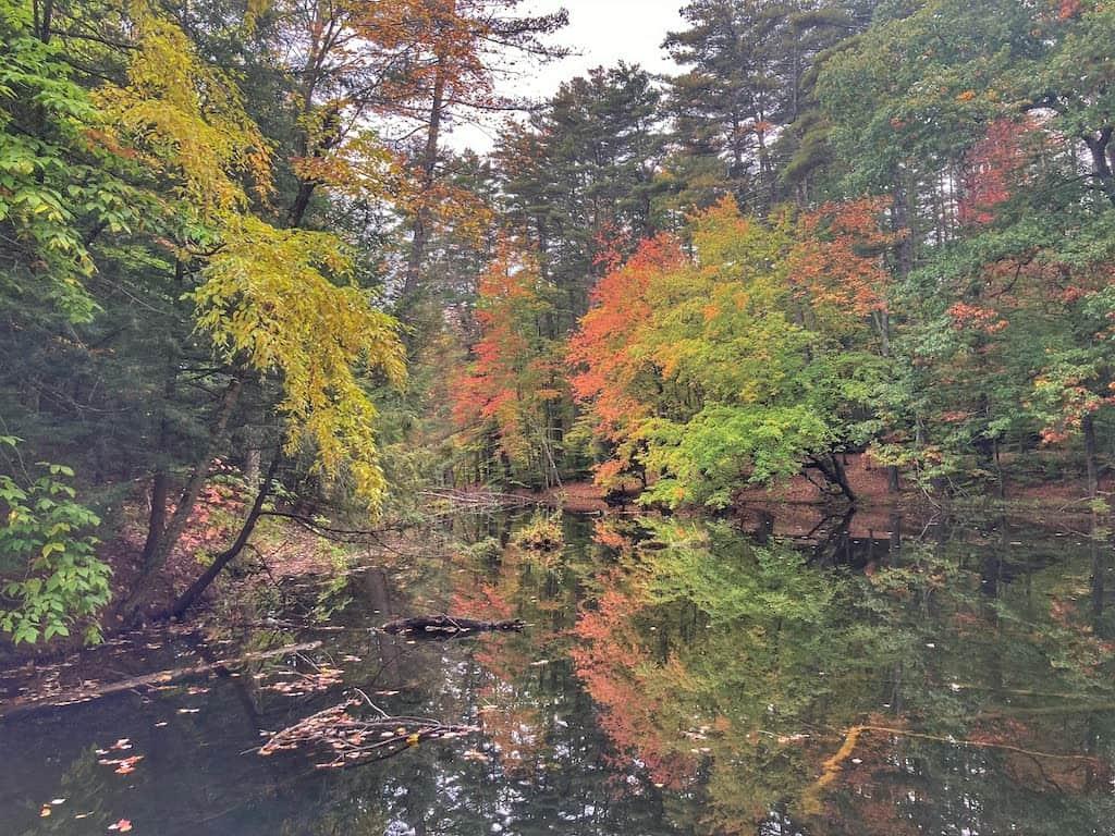 Fall foliage at Lake Shaftsbury State Park.