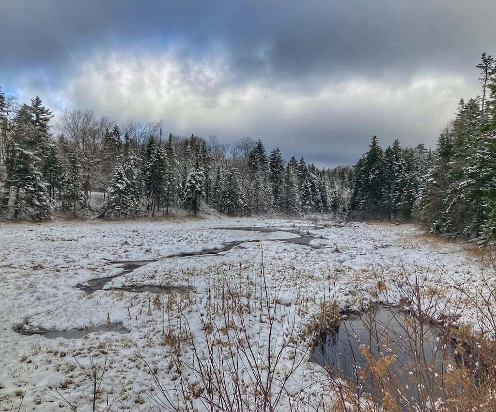 A snowy wetland in Woodford State Park in Vermont.
